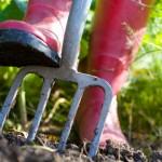 soil_dig